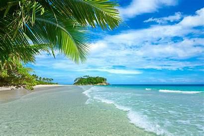 Tropical Palm Beach Trees Landscape Plants Sea