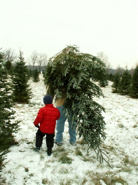 cut your own xmas trees maryland where can i get a tree in dayton