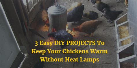 will a heat l keep a dog warm 3 easy diy projects to keep your chickens warm without