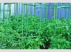 Staking Tomatoes with Avant Garden Cages