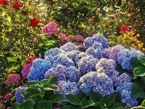 giardini fai da te foto giardini fai da te progettazione giardini giardini fai