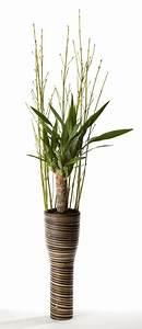 Zimmerpflanzen Feng Shui : feng shui energiepflanzen gr ne geheimnisse feng shui blog haus der harmonie plants ~ Indierocktalk.com Haus und Dekorationen