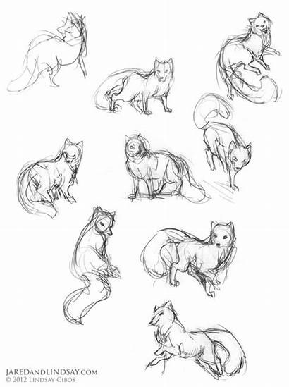 Fox Drawing Draw Arctic Poses Animal Cartoon
