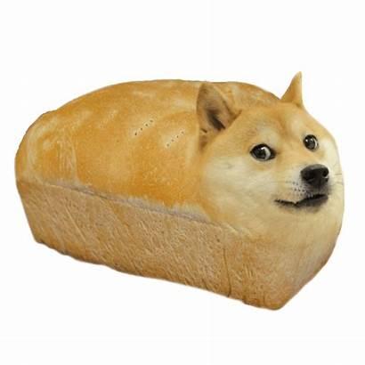 Doge Meme Transparent Dog Pngio