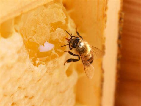 busy   bee     honey bee hive