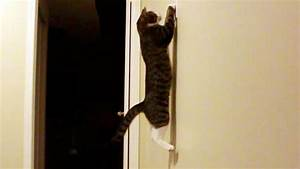 Amazing Cat Jumps To Turn Off The Lights   Slow