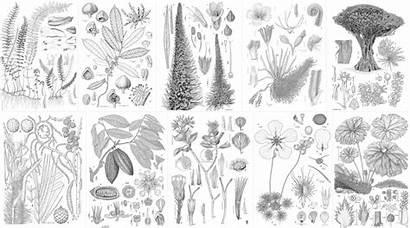 Margaret Flockton Botanical Illustration Scientific Awards Award
