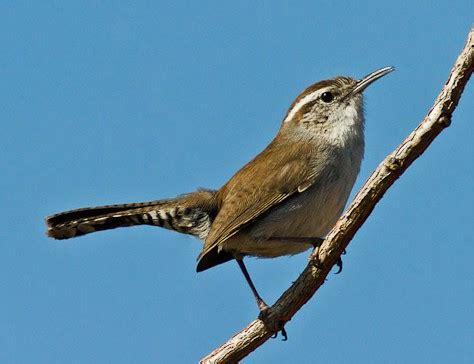 birds   anza borrego desert region