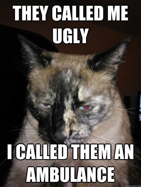 Ugly Cat Meme - they called me ugly i called them an ambulance ugly cat quickmeme