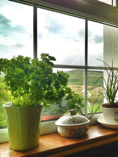 windowsill herbs poundland dealz
