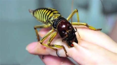 insectes les  gros du monde youtube