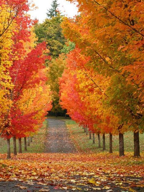 fall colors trees it s written on the wall gotta see amazing photos of fall scenery so many colors