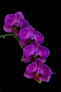 85 best images about Orchid on Pinterest | Orchid flowers ...
