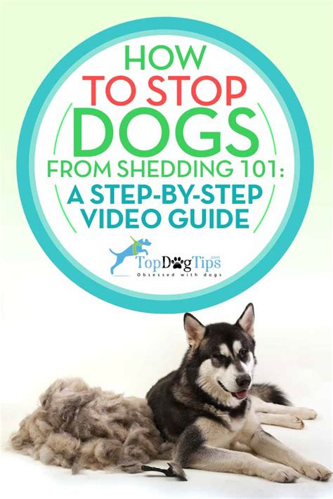stop shedding hair how to stop dogs from shedding 101 step by step guide