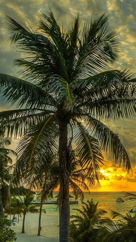 32 Best Images About Florida Palm Trees On Pinterest