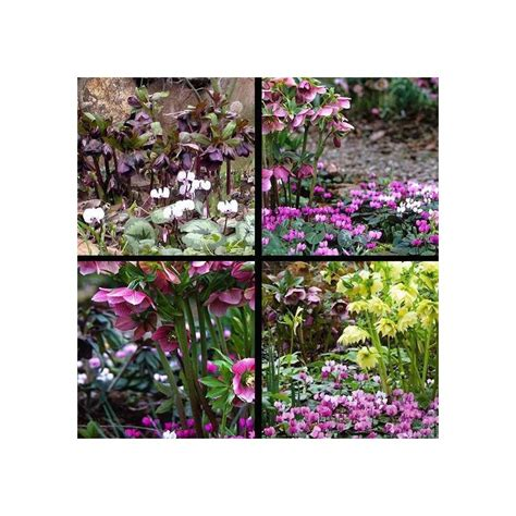 fiori per esterno invernali fiori invernali da esterno vivaio un quadrato di