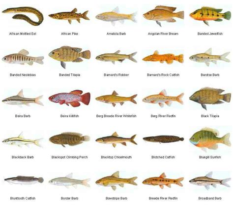 dont  mistakes  choosing  freshwater fish