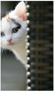 Cat Wallpaper for Desktop (63+ pictures)