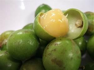 Mamon fruit. Has a lychee sweet fruit | El Salvador - sus ...
