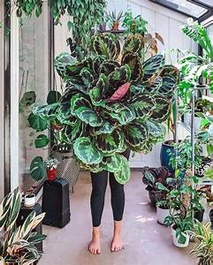 10, Lush, Indoor, Plants, Ideas, To, Decorate, Your, Home