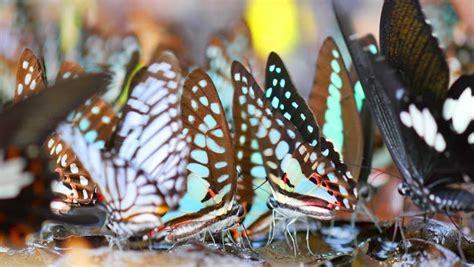 multi cuisine meaning monarch butterfly danaus plexippus closeup on flower 4k