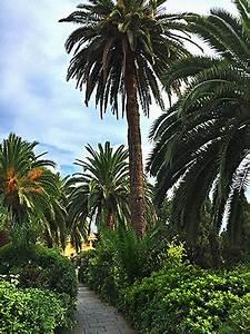 Bilder Von Palmen : mein italien liguriens palmen ~ Frokenaadalensverden.com Haus und Dekorationen