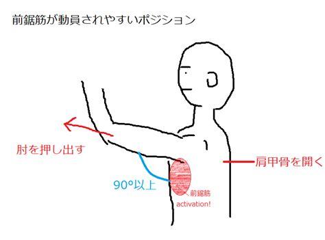 前 鋸 筋 トレーニング