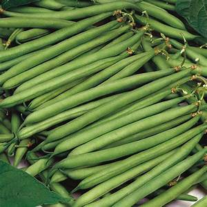 Dwarf Bean Calgary Seeds From Mr Fothergill U0026 39 S Seeds And Plants