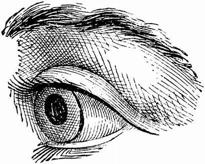 Eye Clipart Drawing Line Realistic Quoom Eyeball