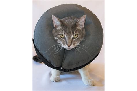 Inflatable E Collar Cat