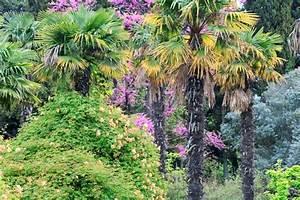 Baum Mit Blüten : palmen und bl ten baum mit roten bl ten im fr hjahr park ~ Michelbontemps.com Haus und Dekorationen