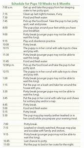 1 month labrador puppy diet cygala With puppy bathroom schedule