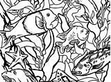 Aquarium Forest Monterey Bay Kelp Coloring Personalized Montereybayaquarium Animal Tide Animals sketch template