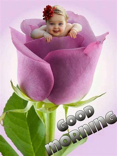 good morning flower imagespics  wisheswhatsapp dp