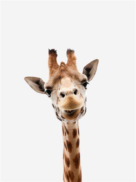 poster met giraffe dieren poster kinderkamer poster