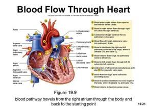 How Blood Flows through Heart