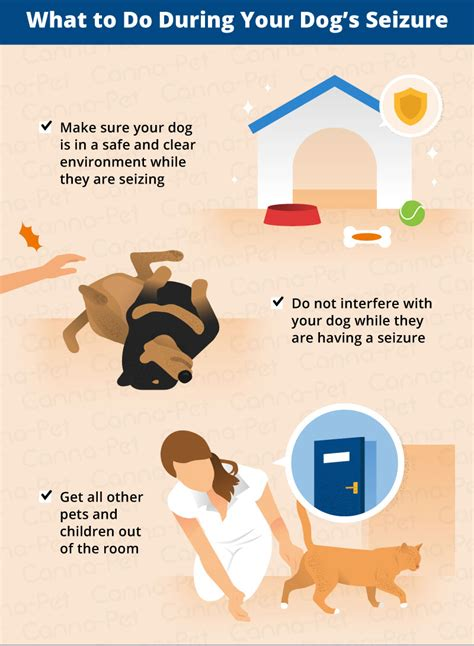 What to Do After Dog Has Seizure