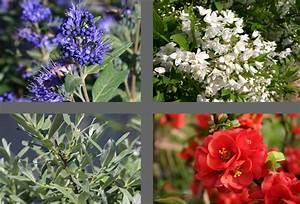 Welche Blumen Für Bienen : bienenfreundliche pflanzen kaufen mein bienengarten welche pflanzen sind gut f r bienen ~ Eleganceandgraceweddings.com Haus und Dekorationen