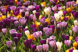 Garten Im März : garten arbeit im m rz der fr hling kann kommen ~ Lizthompson.info Haus und Dekorationen