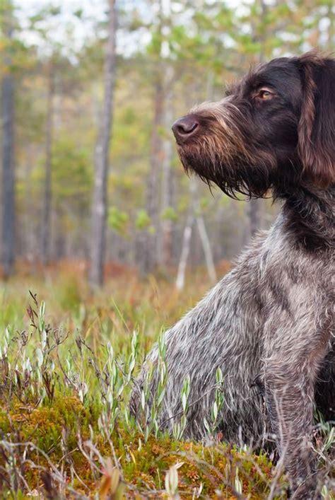 Best Large Dog Breeds in 2020 | Friendly dog breeds, Large dog breeds, Best large dog breeds