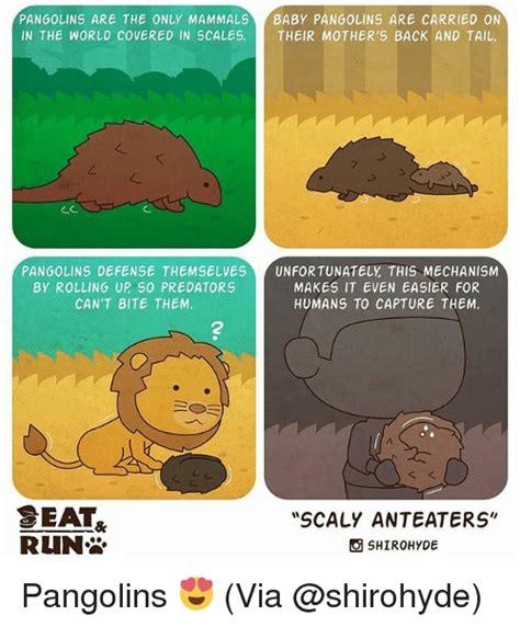 Anteater Meme Generator - 25 best memes about memes memes meme generator
