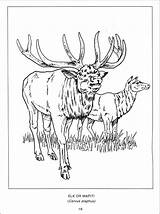 Coloring Canada Goose Pages Getdrawings Geese Printable Colouring Personal Getcolorings sketch template