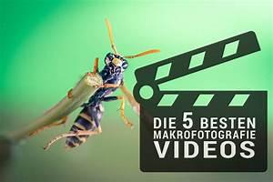 Die Besten Werkzeughersteller : makrofotografie videos top 5 makrotreff ~ Michelbontemps.com Haus und Dekorationen
