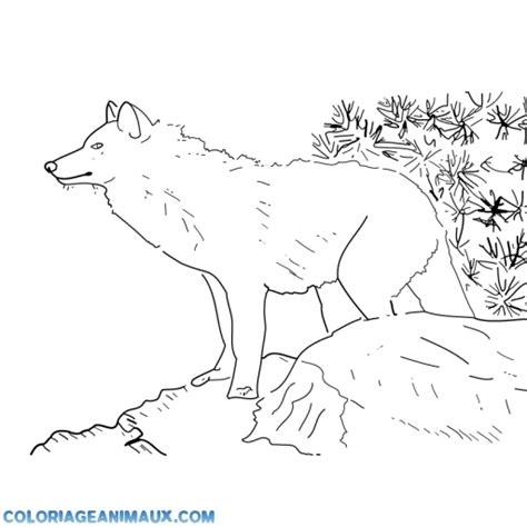 coloriage loup dans la montagne 224 imprimer
