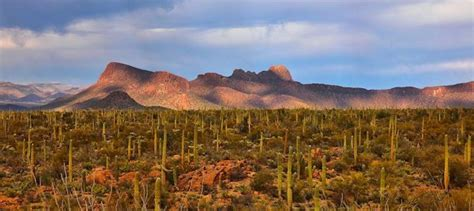 Saguaro National Park West And East
