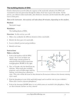 Dna Structure Worksheet Identifying Nucleotides By Digital World Biology