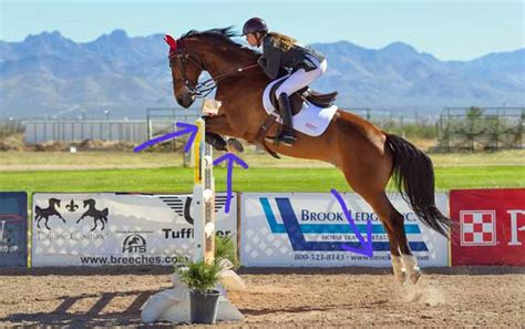 quarter horses jumping horse faster facts than thoroughbreds morten storgaard april