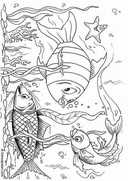 Coloring Fish Pages Underwater Scene Inspiration Own