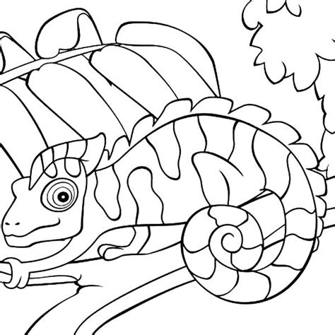 Mixed Up Chameleon Coloring Page by Chameleon Outline Drawing At Getdrawings Free For