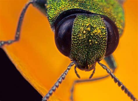 microphotography tips  information ephotozine